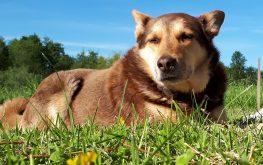 отдых с животными охраняет Полкан