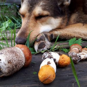 Сбор грибов в июле